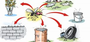 Dangerous Dengue